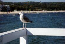 Photo of Polskie morze – sposób na udane wakacje