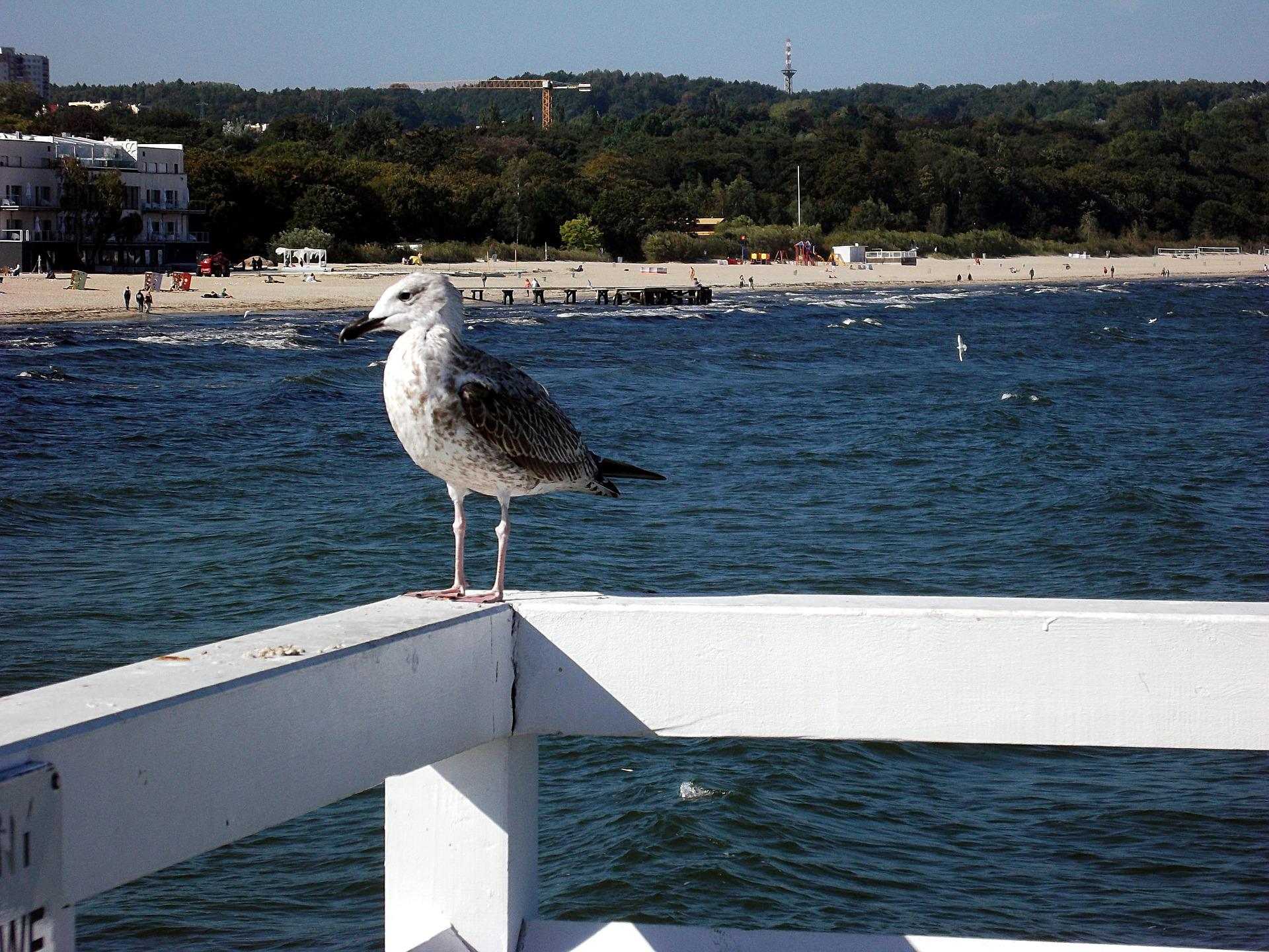 Polskie morze - sposób na udane wakacje - AtrakcjeNaWakacje.pl